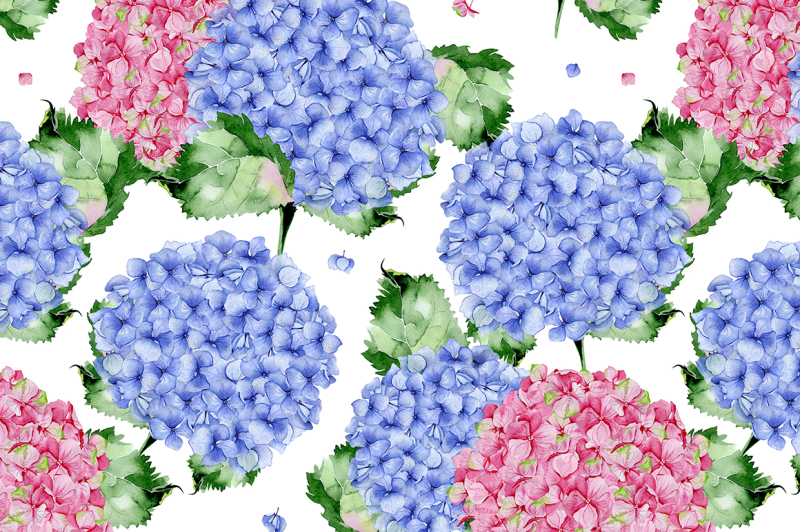 bush-of-hydrangea