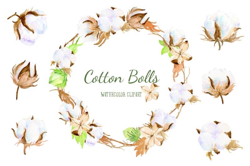 watercolor-cotton-bolls