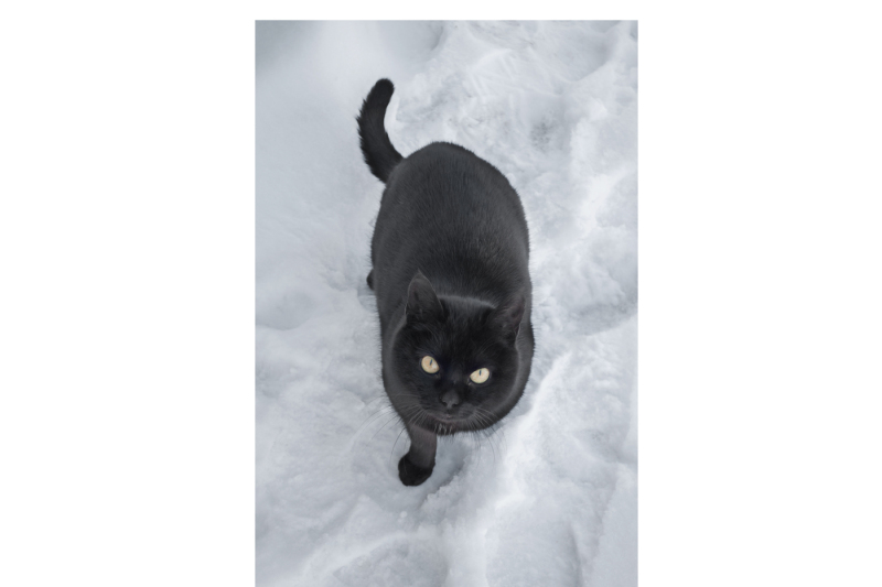 black-cat-in-the-snow-a-set-of-two-files-a-jpeg-with-a-resolution-of-300-dpi-in-the-original-in-jpeg-format-isolated-on-a-white-cat