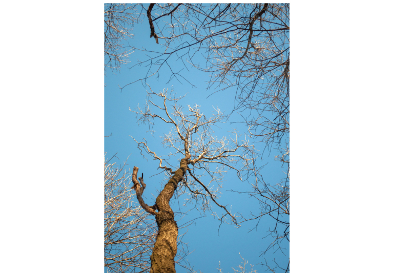 a-tall-tree-from-the-bottom-up-illuminated-by-the-sun-three-pictures-with-a-resolution-of-300-dpi