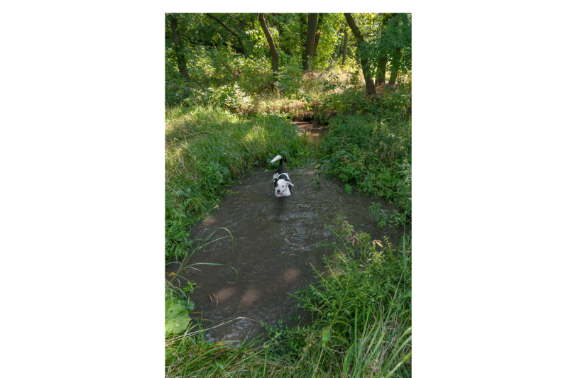 dog-found-in-the-woods-a-dirty-pond-and-bathed-there-a-series-of-eight-photos-jpeg-300-dpi