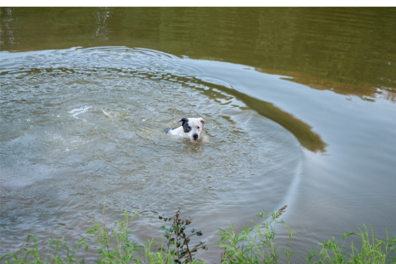 a-dog-swims-in-the-lake-a-series-of-photographs-jpeg-300-dpi