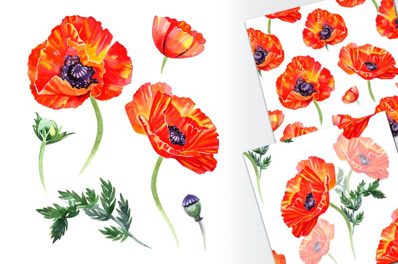 watercolor-poppy-flower-set