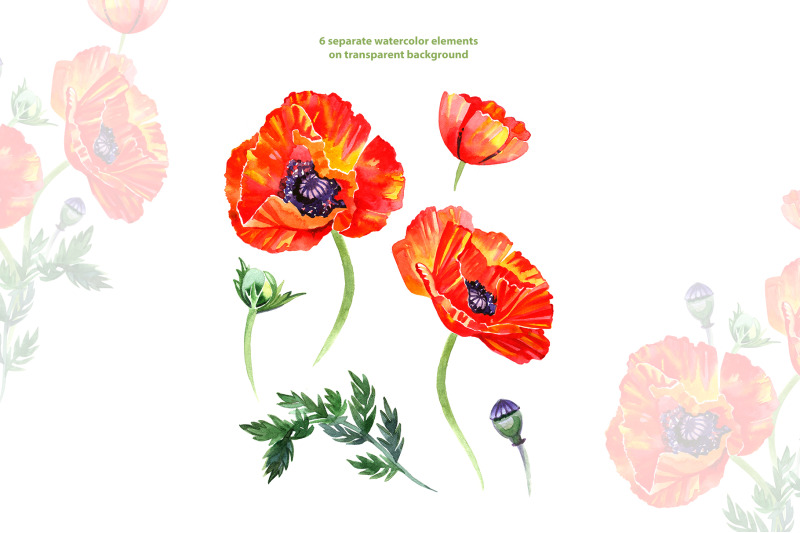 watercolor-poppy-floral-clipart