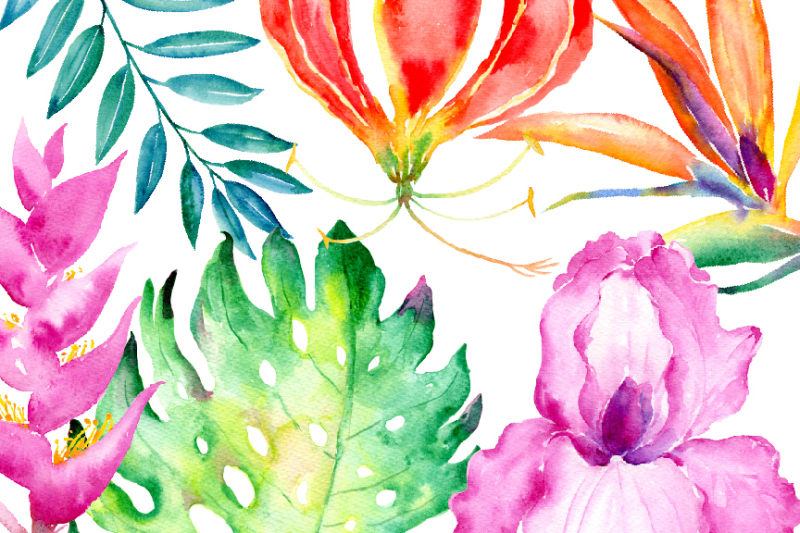 watercolor-clipart-tropical-collection