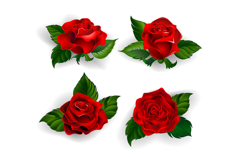 set-of-red-roses