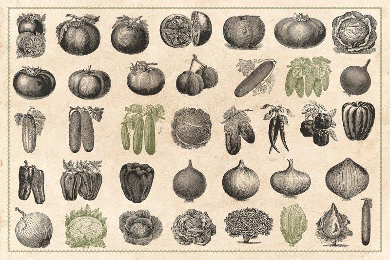 150-vintage-vegetables-vector