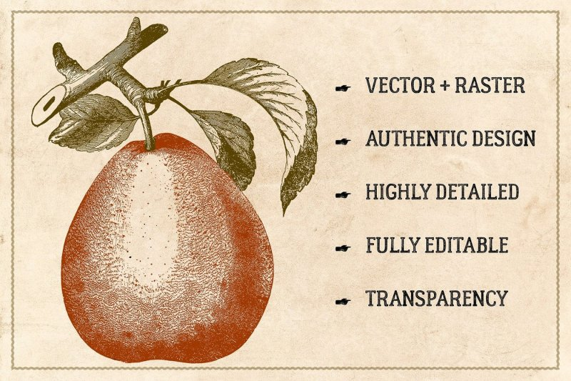120-vintage-fruit-and-nuts-vector