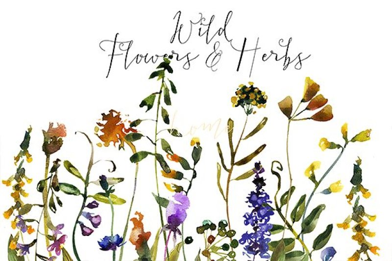 wild-flowers-and-herbs-watercolor-set