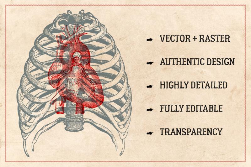 100-vintage-anatomy-illustrations