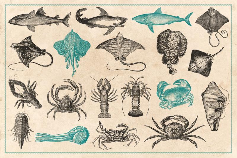 154-vintage-sea-illustrations