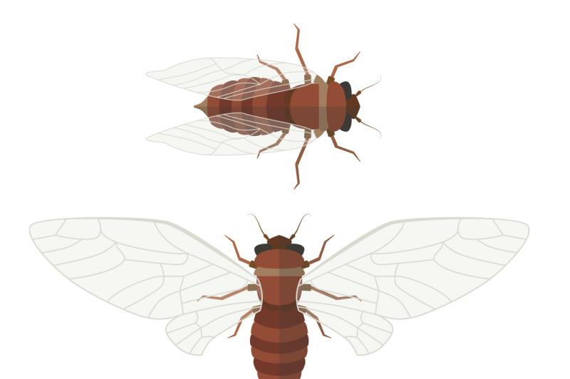 flat-cicada-illustration