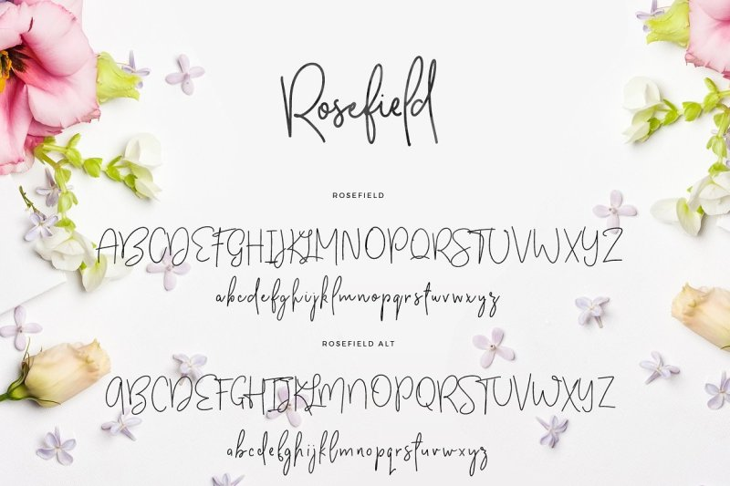 rosefield-typeface