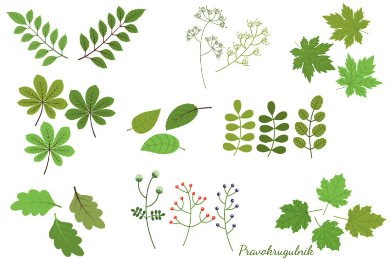 Green foliage clipart, Green leaf clip art, Summer spring ...