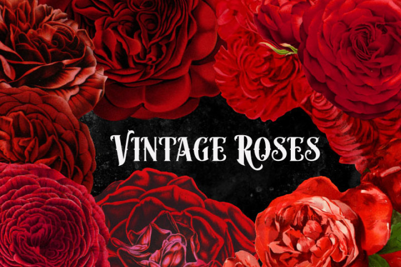 vintage-watercolor-red-roses-clipart