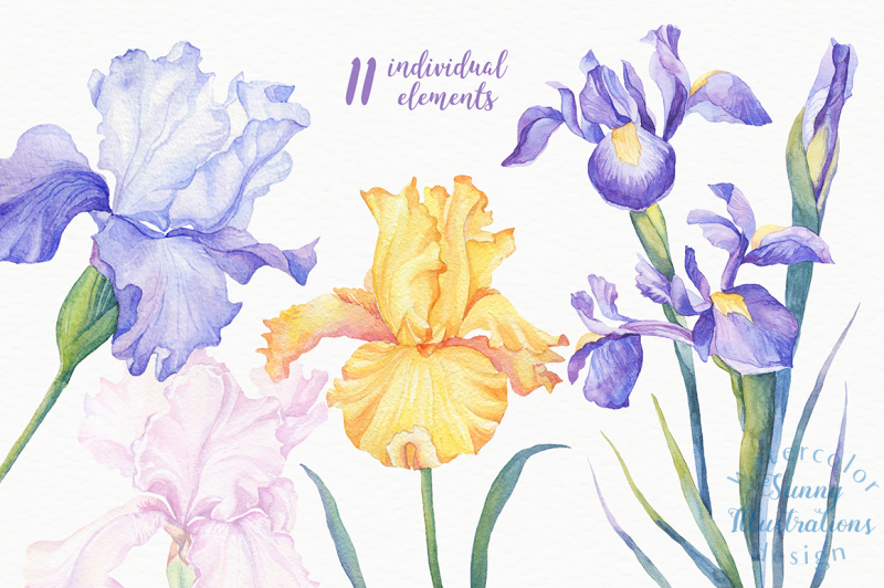 watercolor-irises