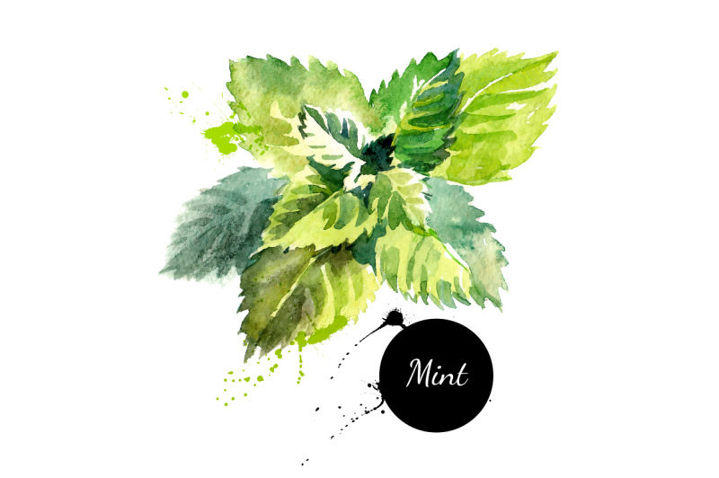 watercolor-han-drawn-herb-and-spices-vector-set