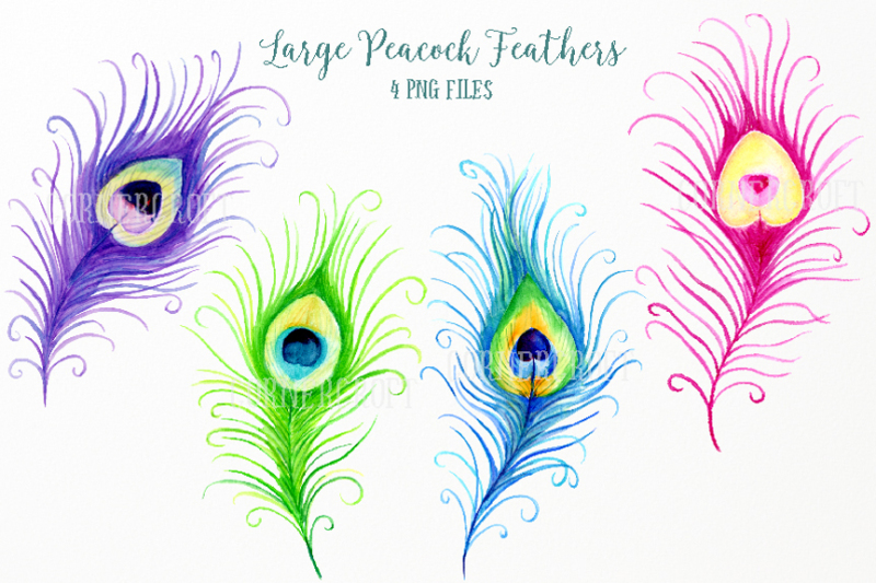 watercolor-peacock-feathers