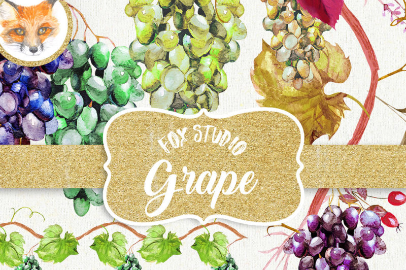 watercolor-grapes-clipart-grape-vineyard-clip-art-wine-grapes-fruits-clip-art-illustrations-watercolor-elements