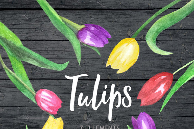 tulip-watercolor-clipart-flower-clipart-wedding-clipart-pink-flower-clipart-digital-clipart-hand-painted-floral-clipart-spring-flower