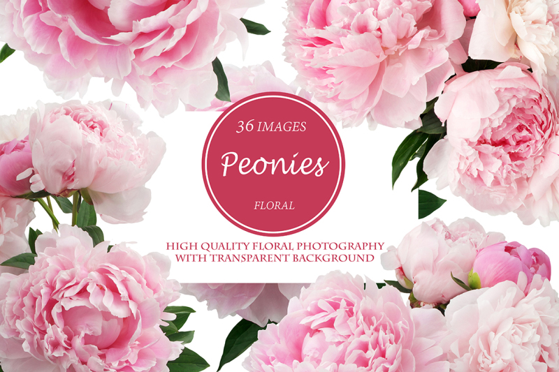 Free Beautiful Peonies (PSD Mockups)