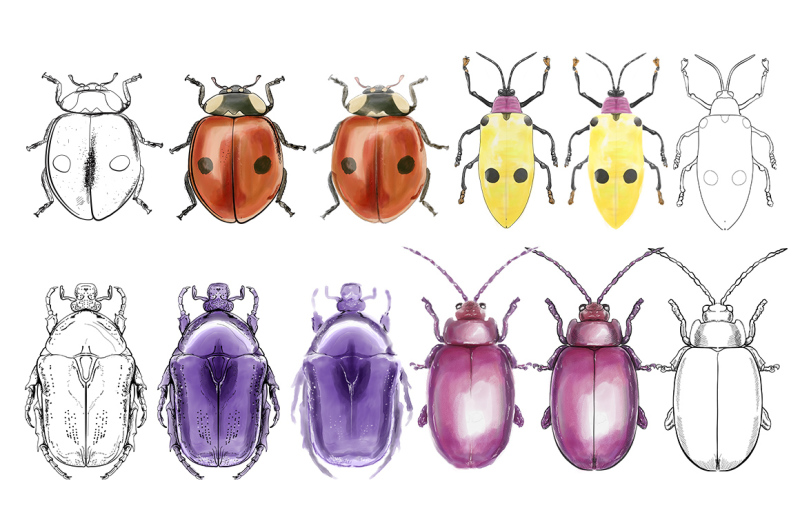 hand-drawn-watercolor-painted-insects