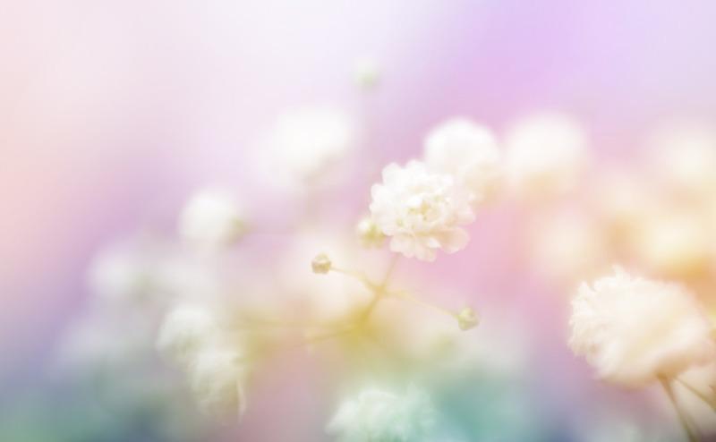 white-flower-on-blur-background-soft-focus