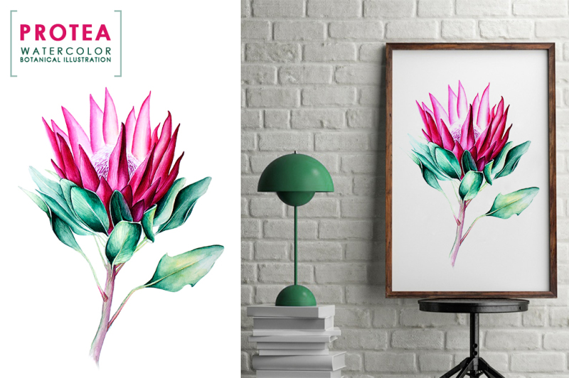 protea-watercolor-botanical