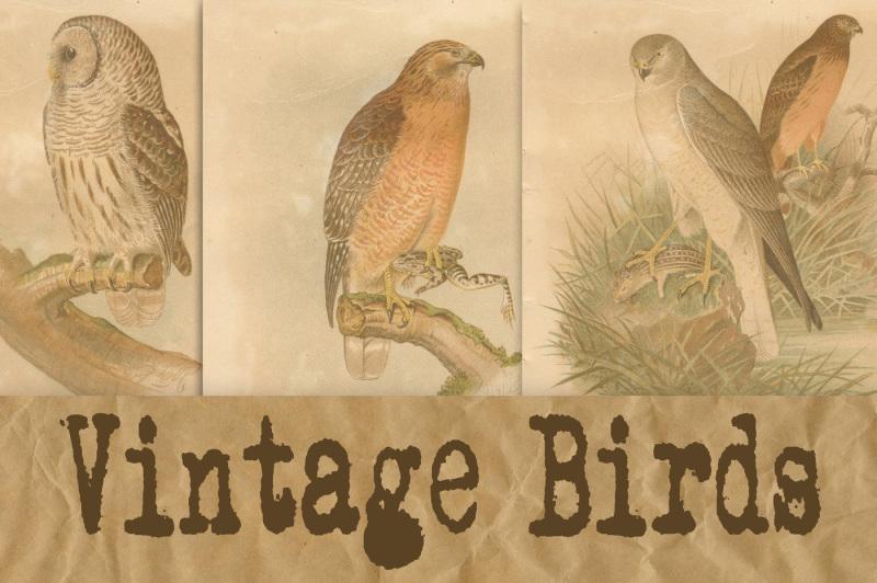 vintage-birds-scientific-plates-digital-paper