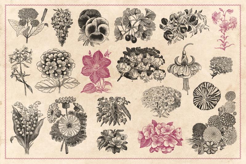 110-vintage-flowers-and-plants-vectors