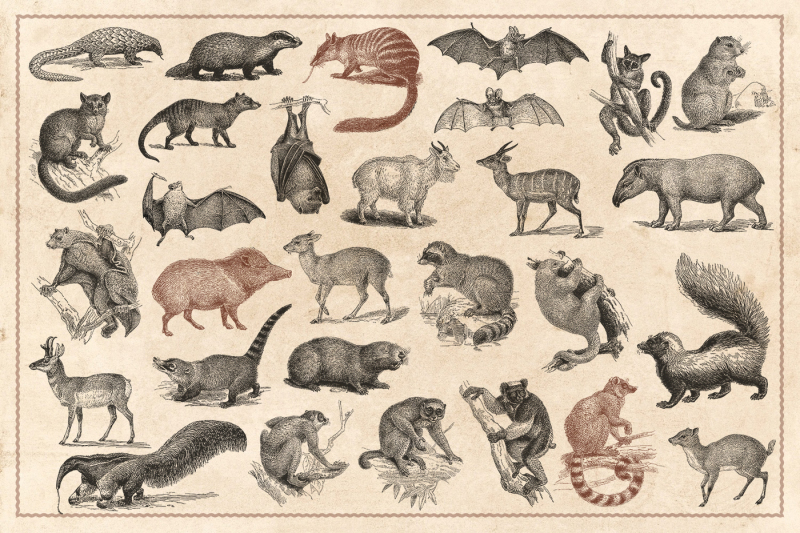 176-vintage-wild-animals-vector