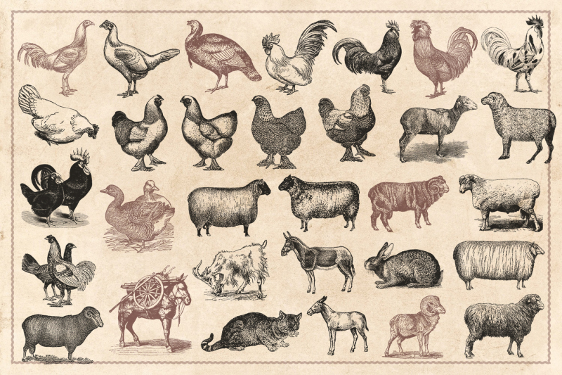 100-vintage-farm-animals-vector