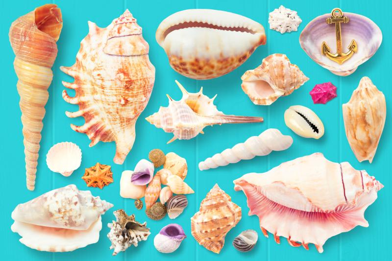 isolated-seashells-and-stones