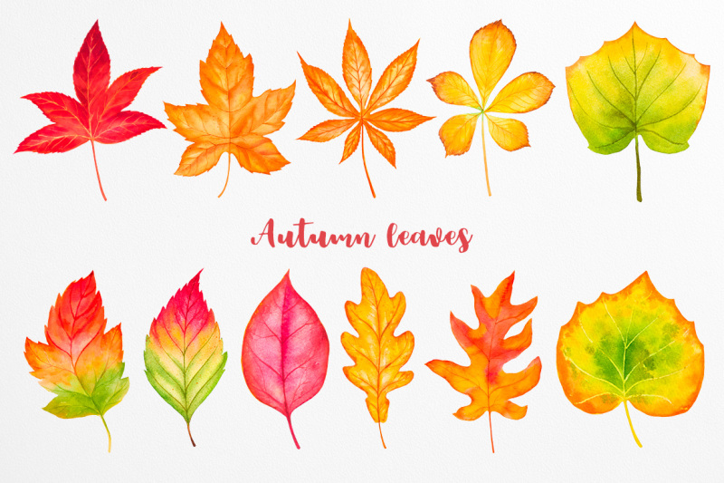 fall-collection-watercolor
