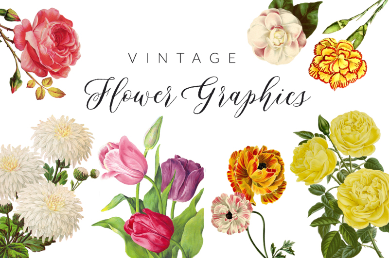 vintage-flower-illustrations