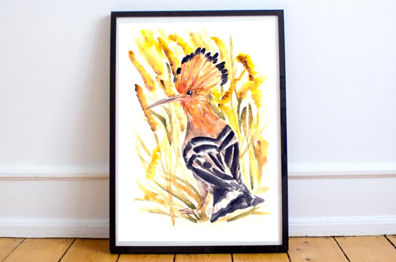 watercolor-hoopoe-print