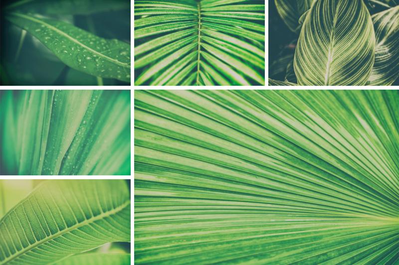 30-tropical-background-photo-bundle