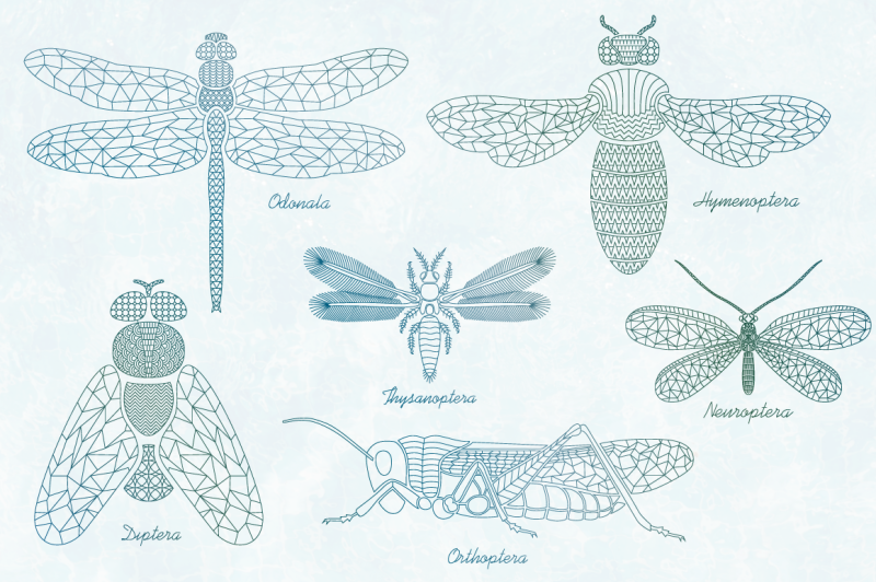 mandala-insects