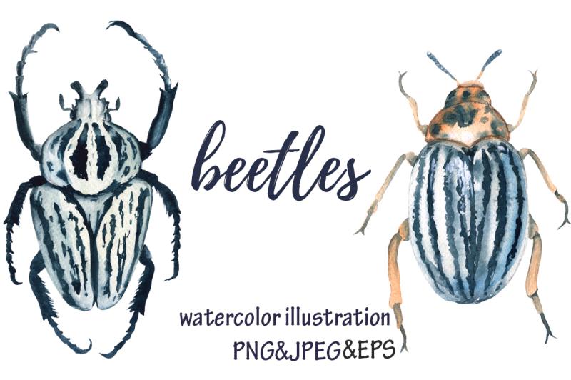 beetles-watercolor-illustration