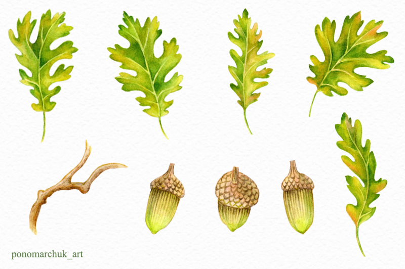 watercolor-fall-acorns-collection