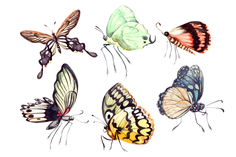 beautiful-watercolor-butterflies