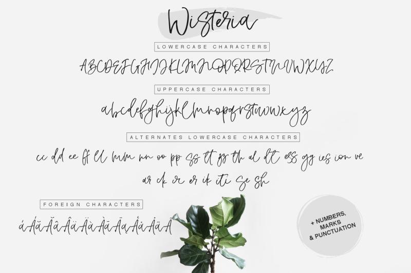 wisteria-script