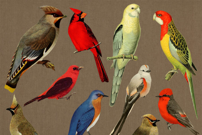 10-vintage-birds-clipart-antique-bird-clipart-vintage-animal-clipart-cardinal-clipart-birds-png