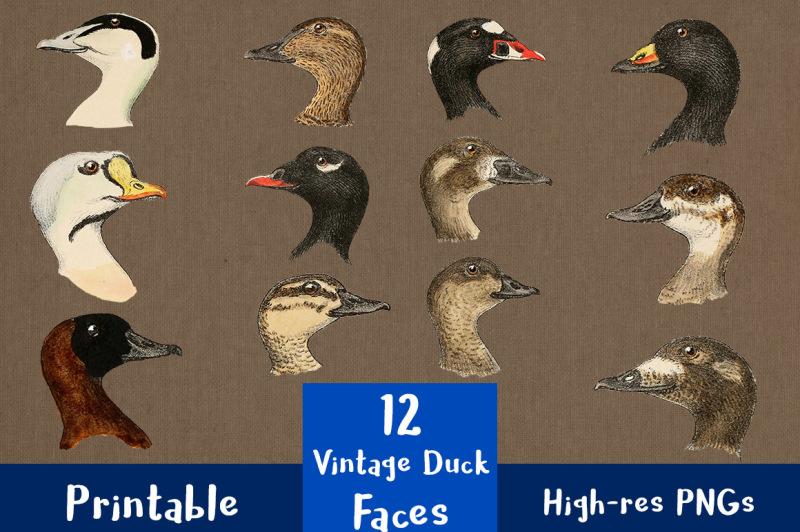 12-vintage-duck-faces-clipart-duck-head-clip-art-antique-farm-animal-clipart-bird-clipart