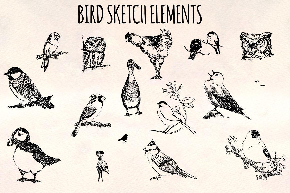 Bird Sketch Elements 16 Ink Owls Ducks And Songbird