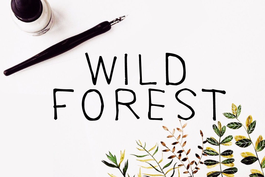 Wild Forest Calligraphy Font Download Modern Digital Typeface By