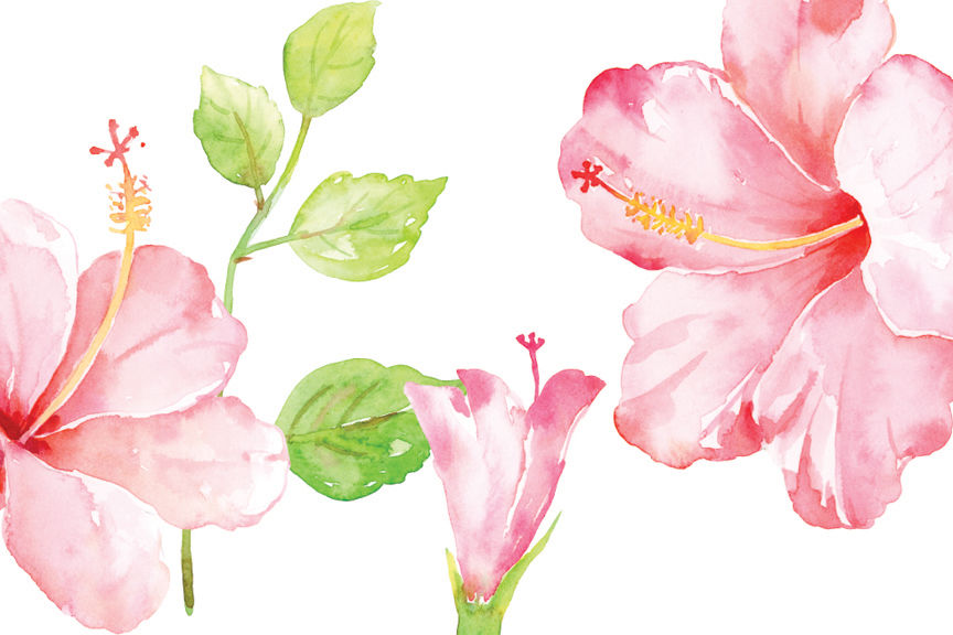 Watercolor Pink Hibiscus Clipart By Cornercroft Thehungryjpegcom