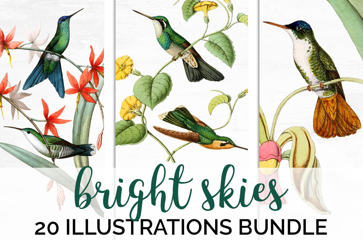 Hummingbird Bundle Bird Clipart Vintage By Enliven Designs