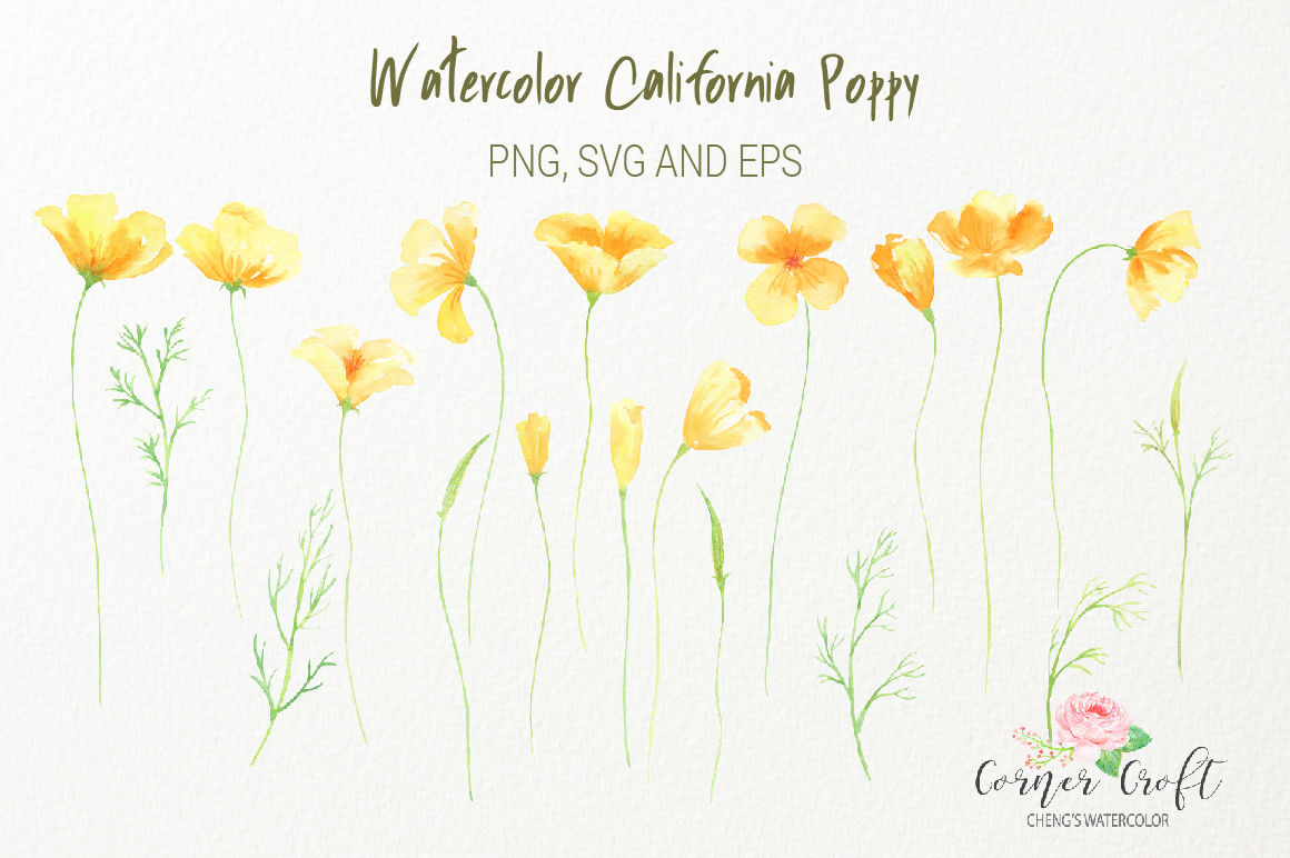 Watercolor California Poppy Png Svg Eps By Cornercroft