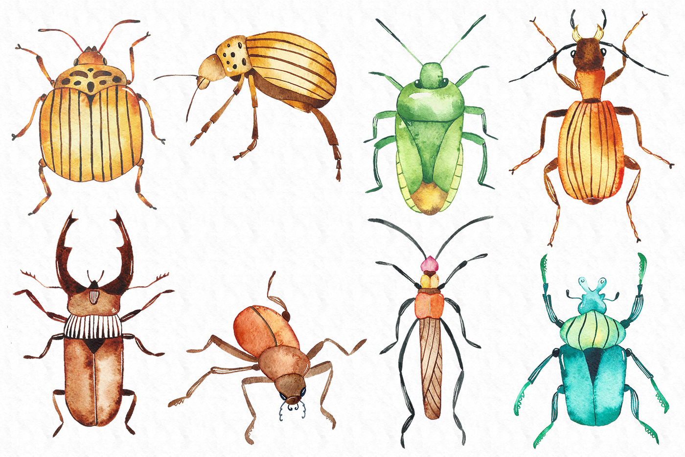 Watercolor Beetles Clipart By Passionpngcreation Thehungryjpeg Com